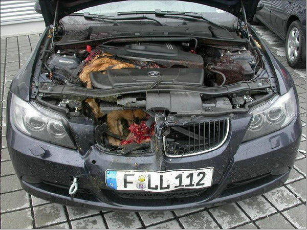 140 Pound Deer Bmw Messy
