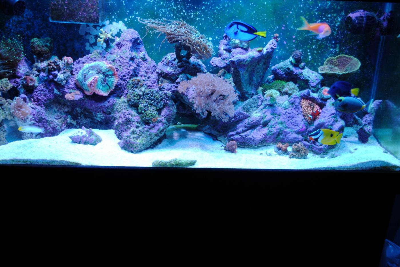 My 14g biocube fish tank for Bio cube fish tank